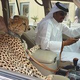 นั่งในรถชิวๆกับสัตว์เลี้ยง
