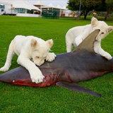 อาหารว่างของสัตว์เลี้ยง