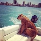 พาสัตว์เลี้ยงนั่งเรือเล่น