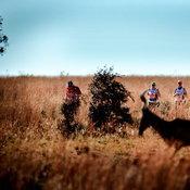 สัตว์ป่าวิ่งกันต่อหน้าต่อตา ณ งาน Big Five Marathon