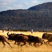 นักวิ่ง สัตว์ป่า และวิ่งมาราธอน Big Five Marathon