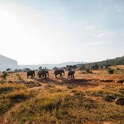 Big Five Marathon งานวิ่งสุดโหด ร่วมสัตว์ป่าแอฟริกา