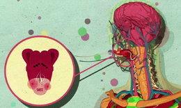 """ชมคลิปอธิบาย """"น้ำตาล"""" ส่งผลต่อสมอง-ทำไมกินหวานแล้วยังอยากกินอีก ?"""