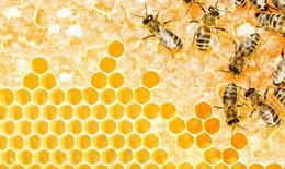 หนุ่มๆ รู้ไว้ กินน้ำผึ้งลดอ้วน′ไม่จริง′ ซ้ำเบาหวาน
