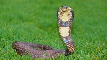 วิธีป้องกัน งู เข้าบ้าน