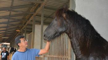 """""""หมอปอ"""" คนเลี้ยงม้า อาชายักษ์ใหญ่-สวยที่สุดในโลก"""