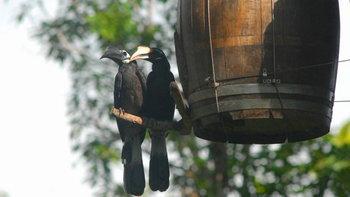 """Hornbill ร่วมกับ มูลนิธิศึกษาวิจัยนกเงือก จัดกิจกรรม """"วันรักนกเงือก"""" ในคอนเซ็ปต์ """"Hornbill…คู่รักแท้"""""""