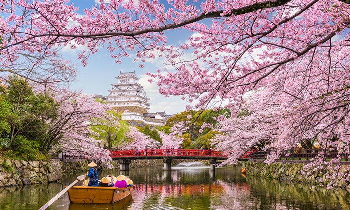 มัดรวมสถานที่ชม ซากุระในฮอกไกโด ที่คุณไม่ควรพลาด
