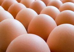 ราคาไข่ไก่ ยุคนี้ !!