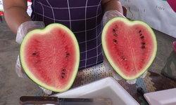 ปลูก 'แตงโมรูปหัวใจ' ปลอดสารพิษ ขายดีรับเทศกาลวาเลนไทน์