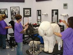 ธุรกิจเสริมสวยสุนัข แค่ใจรักก็ทำได้