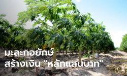 เคล็ดลับปลูกมะละกอยักษ์ สร้างรายได้เดือนละมากกว่า 100,000 บาท