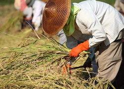 รายงานยอดส่งออกข้าวไทย ติดลบ5.4%