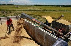 จำนำข้าววุ่นกดราคาขายต่ำสุด 2 ปี หอมมะลิเหลือตันละ 1 พันเหรียญ ถูกกว่าเวียดนามดันส่งออกง่าย