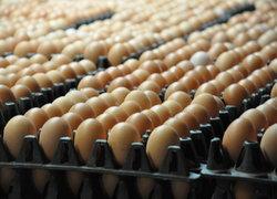 ราคาสินค้าส่วนใหญ่ทรงตัวไข่ไก่ลงฟองละ20สต.