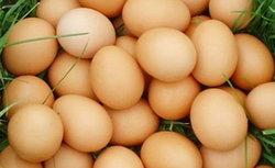 """ต้อนรับ""""เปิดเทอม"""" ไข่ไก่ขยับราคาแน่ พ่อค้าวอนขอให้เห็นใจบ้าง"""