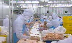 CPFชี้ขายไก่สดพุ่งเกือบ2แสนตัน ส.อาหารโอ่ส่งออกจ่อ2แสนล.ญี่ปุ่น-รัสเซียแห่ซื้อ