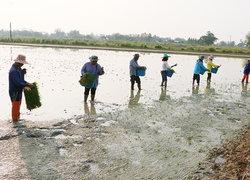 ก.เกษตรชวนชาวนาปลูกพืชทางเลือก