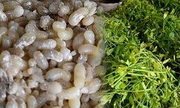 ขายผักหวาน-ไข่มดแดง สร้างรายได้วันละ 1,000 บาท