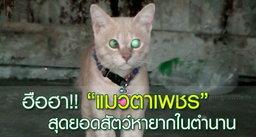 """ฮือฮา!! พบ """"แมวตาเพชร"""" สุดยอดสัตว์หายากในตำนาน"""