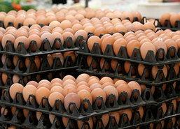 พาณิชย์เผยราคาไข่ไก่วันนี้ลดลงฟองละ20สต.
