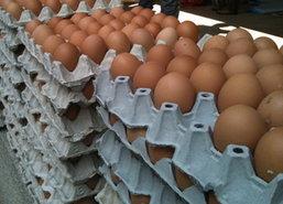 พณ.เผยราคาสินค้าวันนี้-ไข่ไก่ลง10สต./ฟอง
