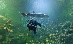 กล้ามั้ย!อาชีพสุดเสียว'ล้างตู้ปลาฉลาม'