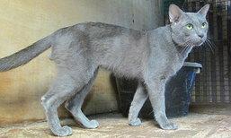 สุนทร เชิดชูธรรม กับอาชีพเพาะเลี้ยงแมวไทยโบราณ ที่ ไร่ขิง นครปฐม