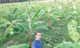 พลิกสวนยางปลูก′กล้วยหอม′ ธุรกิจท้องถิ่นสู่ตลาดต่างประเทศ...ที่ใครๆ ก็ว่า ′เพี้ยน′