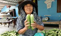 ปลูกแตงร้าน และพืชหมุนเวียน สร้างรายได้วันละ 2,000 บาท