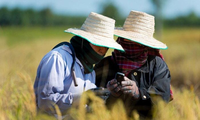 รัฐบาลคลอด 2 มาตรการช่วยเกษตรกร-ให้สินเชื่อและพัฒนาความรู้