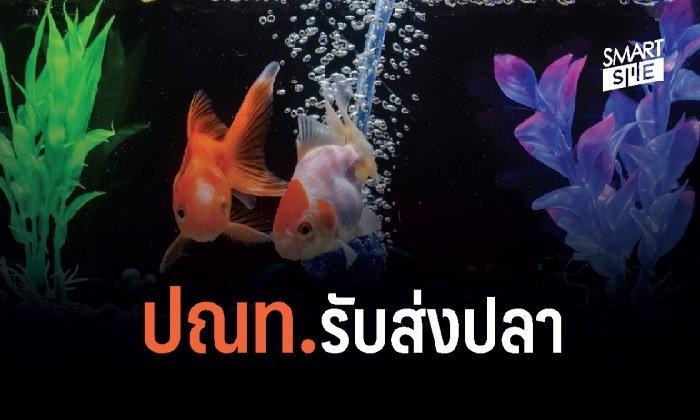 """""""ไปรษณีย์ไทย"""" ส่งปลากัดได้แล้วนะ!"""