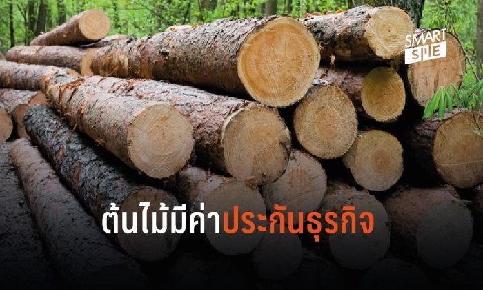 ต้องรู้! ต้นไม้ 4 กลุ่ม ประกันธุรกิจ-ค้ำเงินกู้ได้