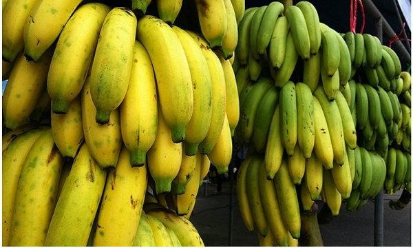 """ซีพีเอฟดันชาวนาปลูกกล้วยหอม """"อดิเรก"""" ชี้ดีมานด์ทั่วโลกพุ่ง """"อีโตชู"""" ญี่ปุ่นรับซื้อไม่อั้น"""