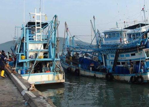 กรมประมงแจงมติขับเคลื่อนอุตสาหกรรมกุ้งไทย