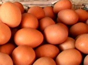 ลดวันแรก! ไข่ไก่หน้าฟาร์มเหลือ2.70บ.