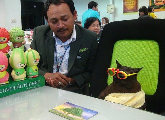 พากันตื่นเต้น! ′จอนนี่แมวศุภลักษณ์′ เหมียวเซเลบโลกออนไลน์ เปิดบัญชีซื้อสลากธกส.