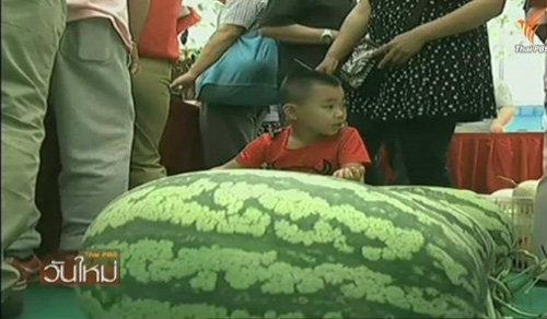 งานประกวดแตงโมในกรุงปักกิ่ง