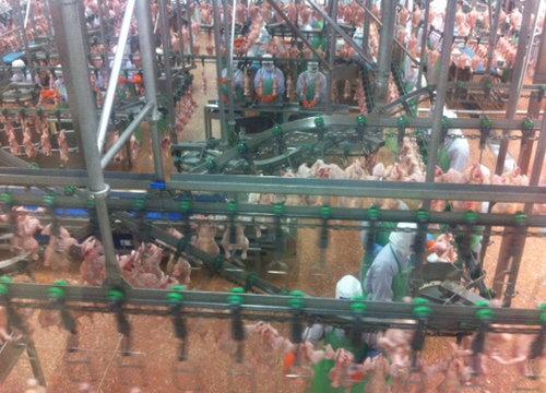 รัฐร่วมเอกชนเร่งเปิดตลาดไก่ส่งออกเกาหลีใต้