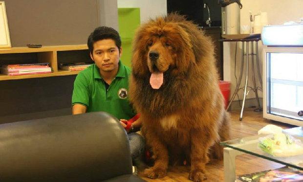 หมาตัวละ 36 ล้าน เพาะพันธุ์จำหน่ายแล้วในไทย