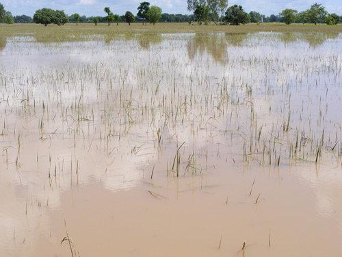กษ.เผยน้ำท่วมภาคเกษตรเสียหายแล้ว853,000ไร่