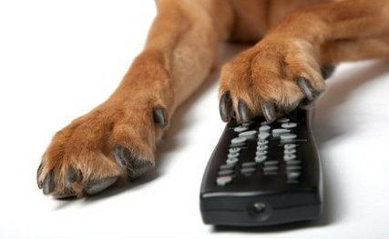 DogTV ธุรกิจเกิดใหม่ เอาใจคนรักน้องหมา