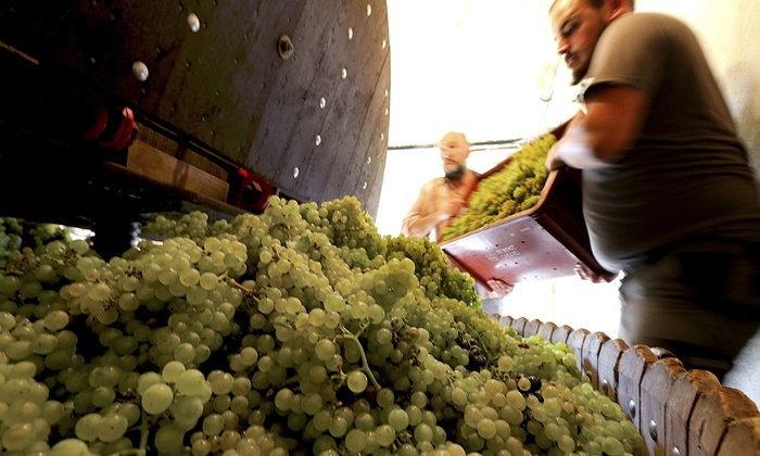 ธุรกิจไวน์ระส่ำ-กำลังผลิตลดลงหนักสุดในรอบ 50 ปี