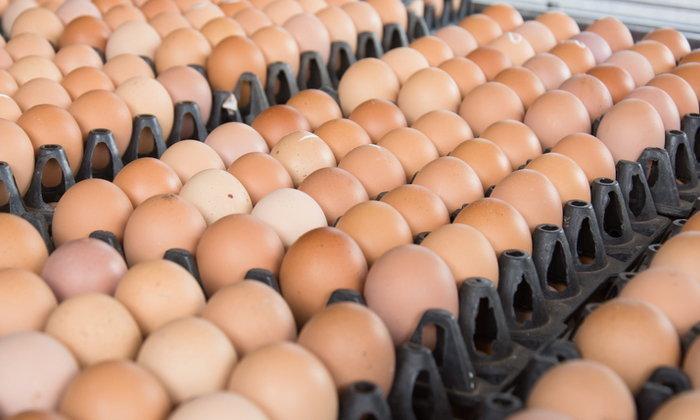 เช็คด่วน ราคาไข่ไก่ตกต่ำรอบ 5 ปี