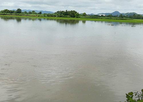 ส.ชาวนาเล็งชงรัฐช่วยพื้นที่นาน้ำท่วม100%เงิน4,500บ./ไร่