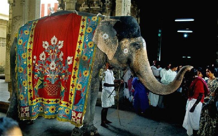 ช้างอินเดียรายได้ดี สรรพากรเรียกเก็บภาษี