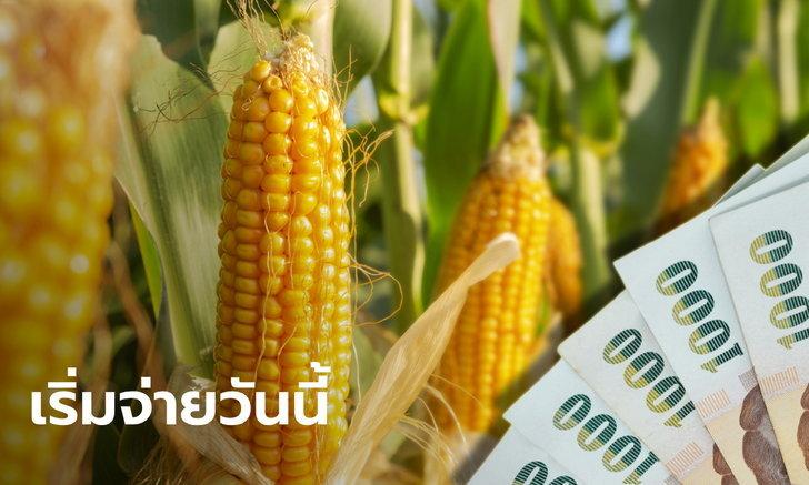 ธ.ก.ส. เริ่มจ่ายเงินประกันรายได้เกษตรกรผู้ปลูกข้าวโพดเลี้ยงสัตว์กว่า 637 ล้านบาท