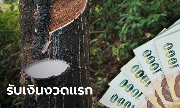 ดีเดย์ 11 ธ.ค. นี้! ชาวสวนยางถือบัตรสีเขียว-ชมพู รับเงินประกันรายได้ยางพาราเข้าบัญชี