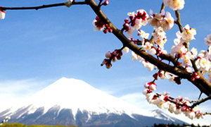 โรบินฮู้ดพุ่ง ญี่ปุ่นเพิ่มมาตรการเข้มนักท่องเที่ยวไทย