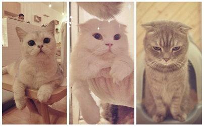 โดนใจ!! cataholic cafe คาเฟ่สำหรับคนรักแมว